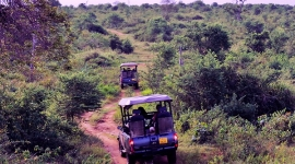 Wildlife safari tours Sri Lanka