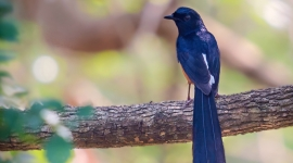 Sri Lanka bird watching, Best birding excursions in Bundala, Kumana and Sinaharaja Rain Forest Sri Lanka