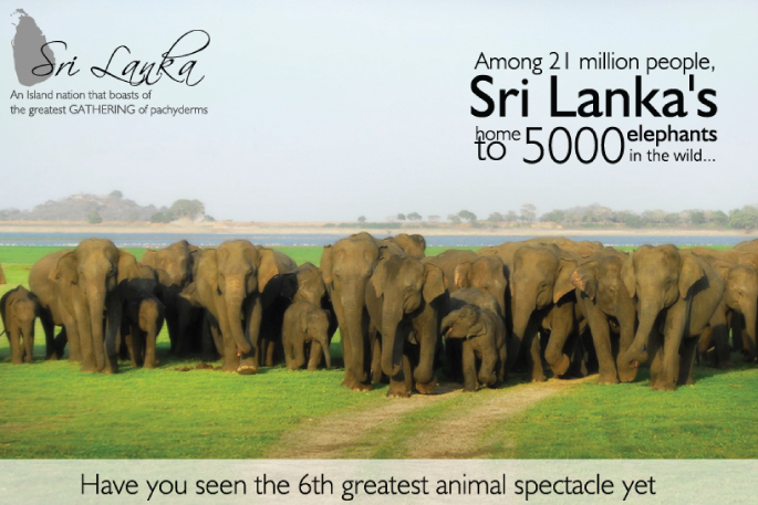 Elephant tours Sri Lanka