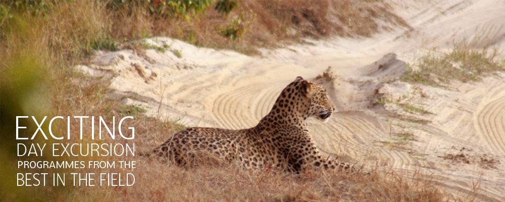 Wildlife safari, Wildlife tours, wildlife camping in Sri Lanka national parks with Sri Lanka Day Tours