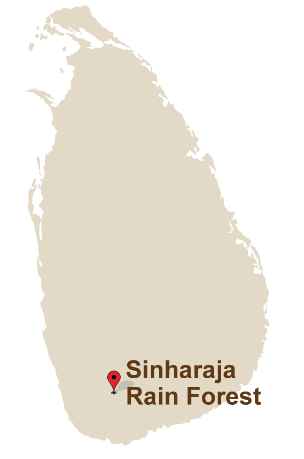 1 Mahoora Camps at Sinharaja