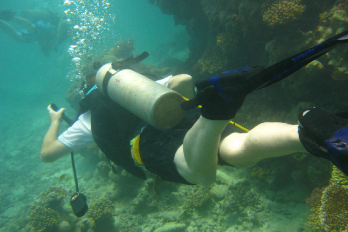 Diving in Negombo