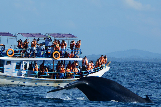 Whale watching Mirissa, Whale watching Sri Lanka, Whale watching Experience